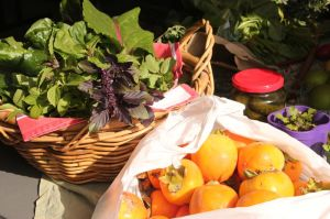 Gourmet basil and bags of persimmons at May Food Swap