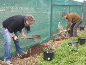 planting our fruit trees