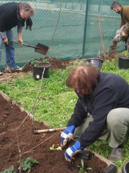 gardening and tree planting