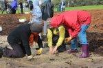 MCMC-Fawkner-grass-planting-LorneSt-IMG_0461