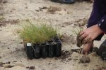 MCMC-Fawkner-grass-planting-LorneSt-IMG_0476