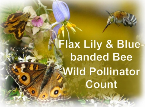 20161026_flax-lily-bluebanded-bee-count
